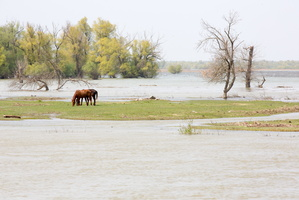 Cheval dans le delta