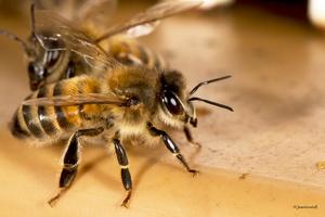 Retour à la ruche